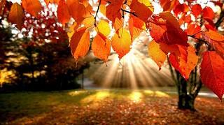 Heute ist Meteorologischer Herbstanfang.  Wie bereit ich mein Fahrzeug vor?